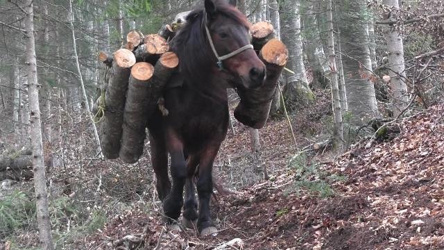 konj1.jpg